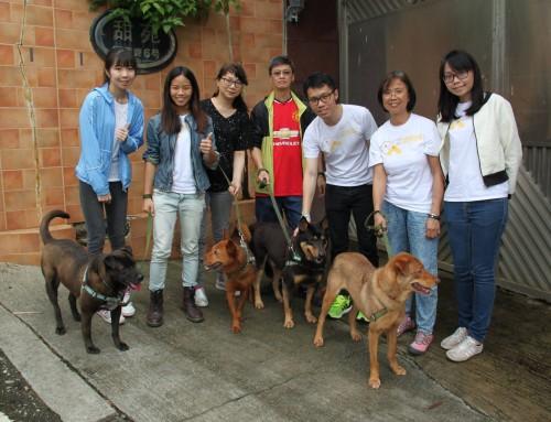 Senior CID 拯狗隊 香港寵物保姆社企